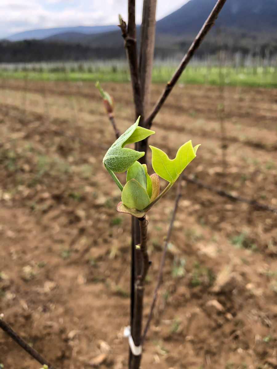 At the Nursery: April Leafout