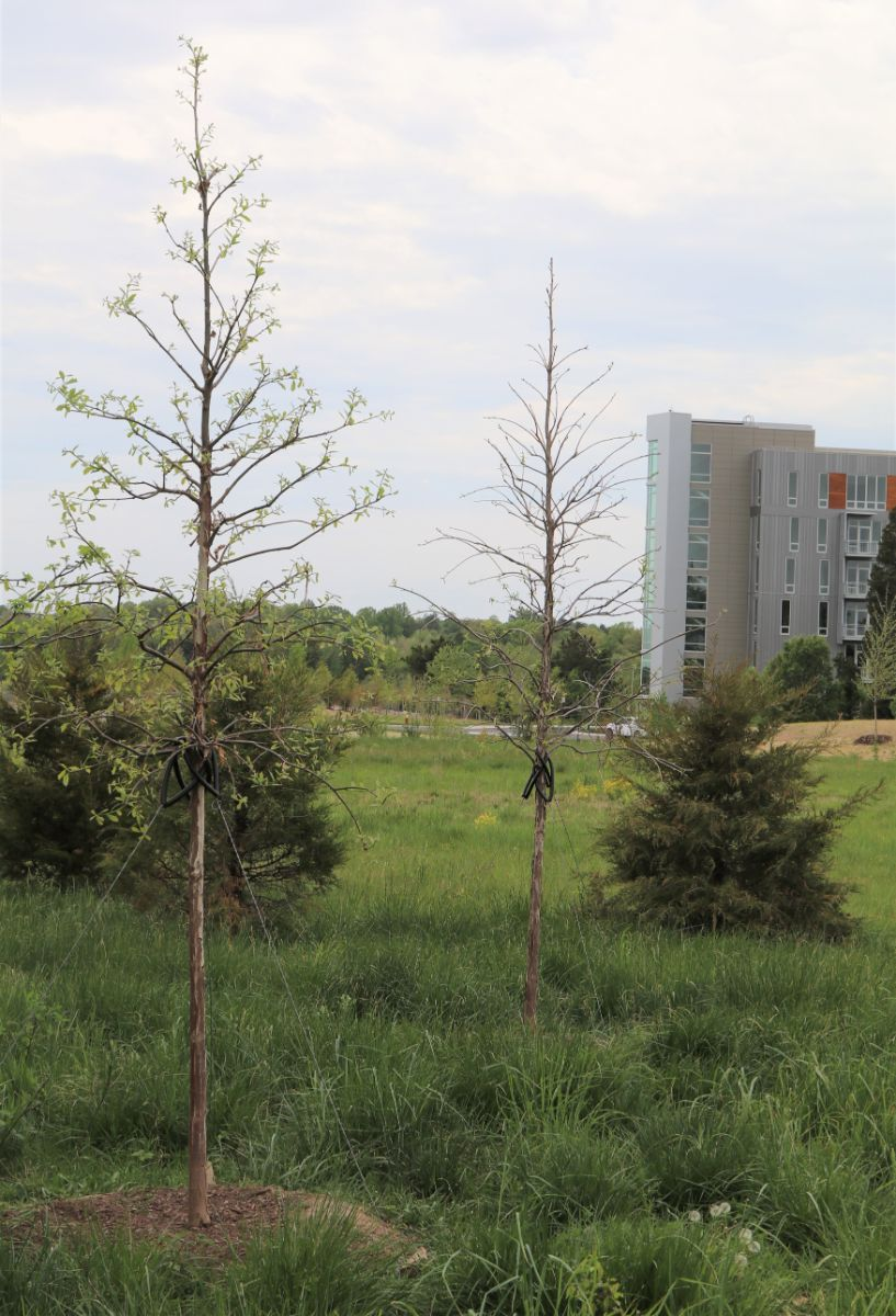WHN In the Landscape: Janelia Research Campus